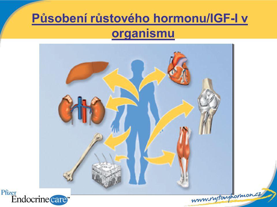 Působení růstového hormonu/IGF-I v organismu