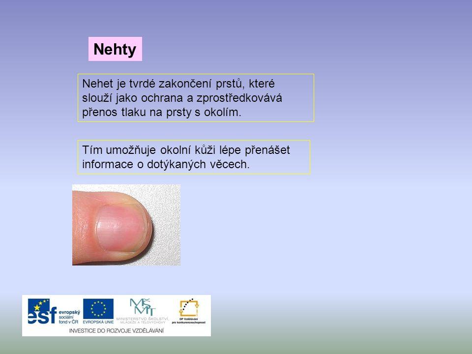 Tím umožňuje okolní kůži lépe přenášet informace o dotýkaných věcech. Nehty Nehet je tvrdé zakončení prstů, které slouží jako ochrana a zprostředkováv