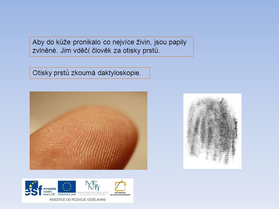 Barvivo, které způsobuje zbarvení vlasů Pomocí hmatových tělísek vnímáme Druhá vrstva kůže ve které se vytváří pot Daktyloskopie zkoumá … prstů Kožní maz vylučují Zánětlivé vřídky na povrchu kůže Hlavní funkce podkožního vaziva PIGMENT BOLEST ŠKÁRA OTISKY MAZOVÉ ŽLÁZY AKNÉ IZOLOVAT ŘEŠENÍ: Nejsvrchnější část lidské kůže se nazývá pokožka.