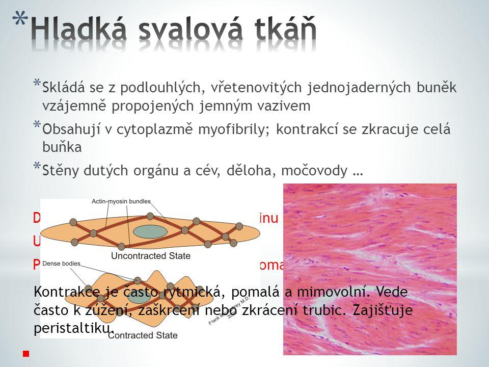 * Skládá se z podlouhlých, vřetenovitých jednojaderných buněk vzájemně propojených jemným vazivem * Obsahují v cytoplazmě myofibrily; kontrakcí se zkracuje celá buňka * Stěny dutých orgánu a cév, děloha, močovody … Dovedeme ovládat hladkou svalovinu vůlí.