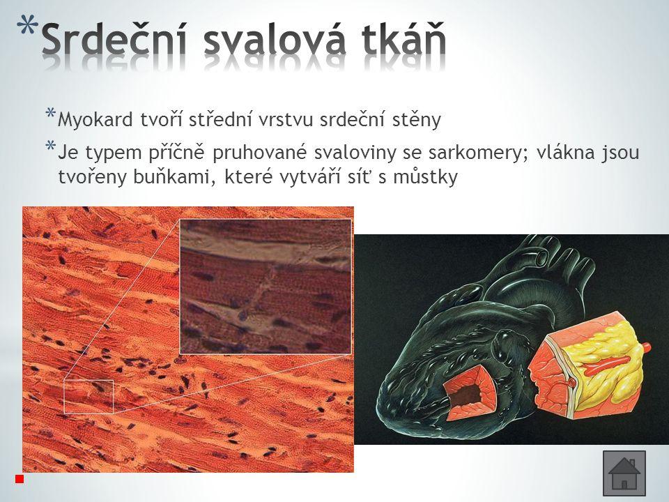 * Myokard tvoří střední vrstvu srdeční stěny * Je typem příčně pruhované svaloviny se sarkomery; vlákna jsou tvořeny buňkami, které vytváří síť s můstky Dovedeme ovládat tuto svalovinu vůlí.