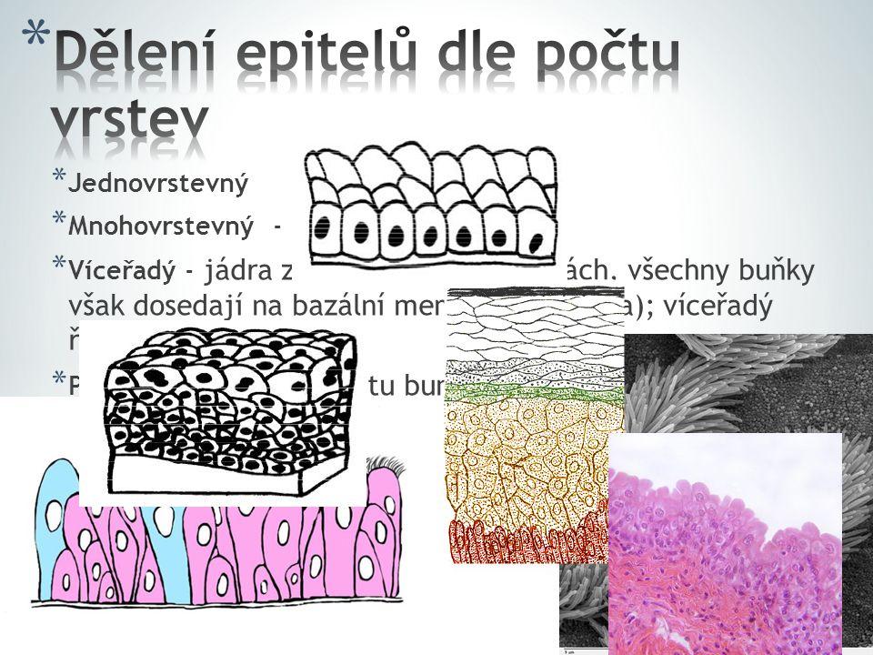 * Jednovrstevný * Mnohovrstevný - pokožka, ústní dutina * Víceřadý - jádra zdánlivě ve více vrstvách, všechny buňky však dosedají na bazální membránu (výživa); víceřadý řasinkový * Přechodný - změna počtu buněk podle stavu, ve vrchních vrstvách se nacházejí volné buňky; močový měchýř
