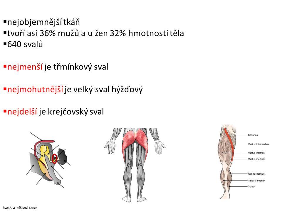  nejobjemnější tkáň  tvoří asi 36% mužů a u žen 32% hmotnosti těla  640 svalů  nejmenší je třmínkový sval  nejmohutnější je velký sval hýžďový  nejdelší je krejčovský sval http://cs.wikipedia.org/