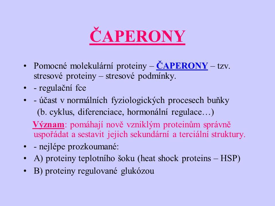 ČAPERONY Pomocné molekulární proteiny – ČAPERONY – tzv.