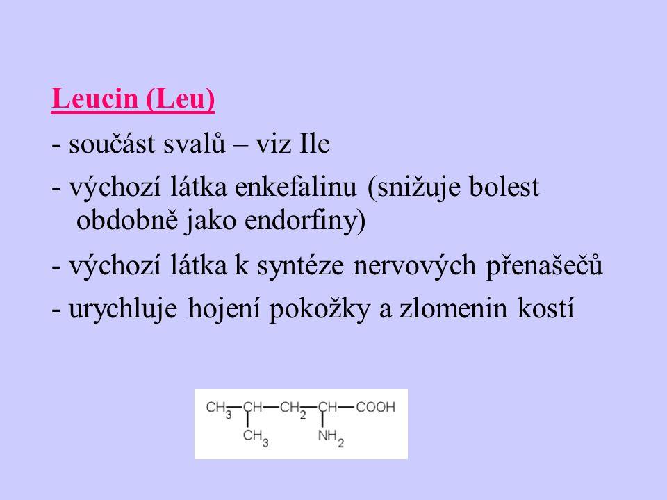 Leucin (Leu) - součást svalů – viz Ile - výchozí látka enkefalinu (snižuje bolest obdobně jako endorfiny) - výchozí látka k syntéze nervových přenašečů - urychluje hojení pokožky a zlomenin kostí