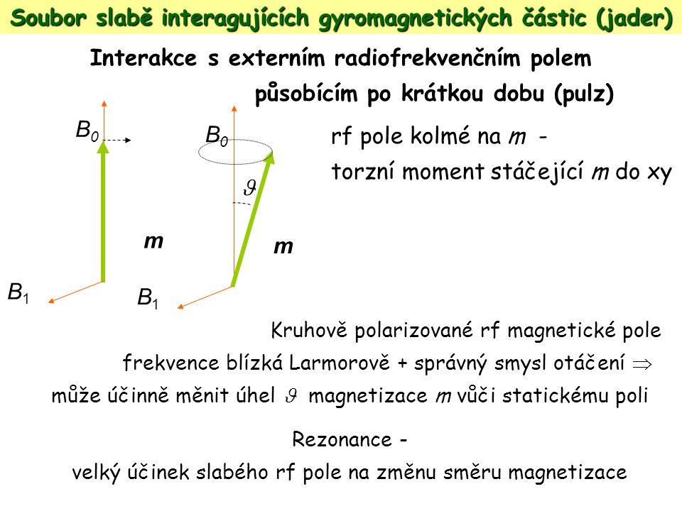 Soubor slabě interagujících gyromagnetických částic (jader) Interakce s externím radiofrekvenčním polem působícím po krátkou dobu (pulz) rf pole kolmé