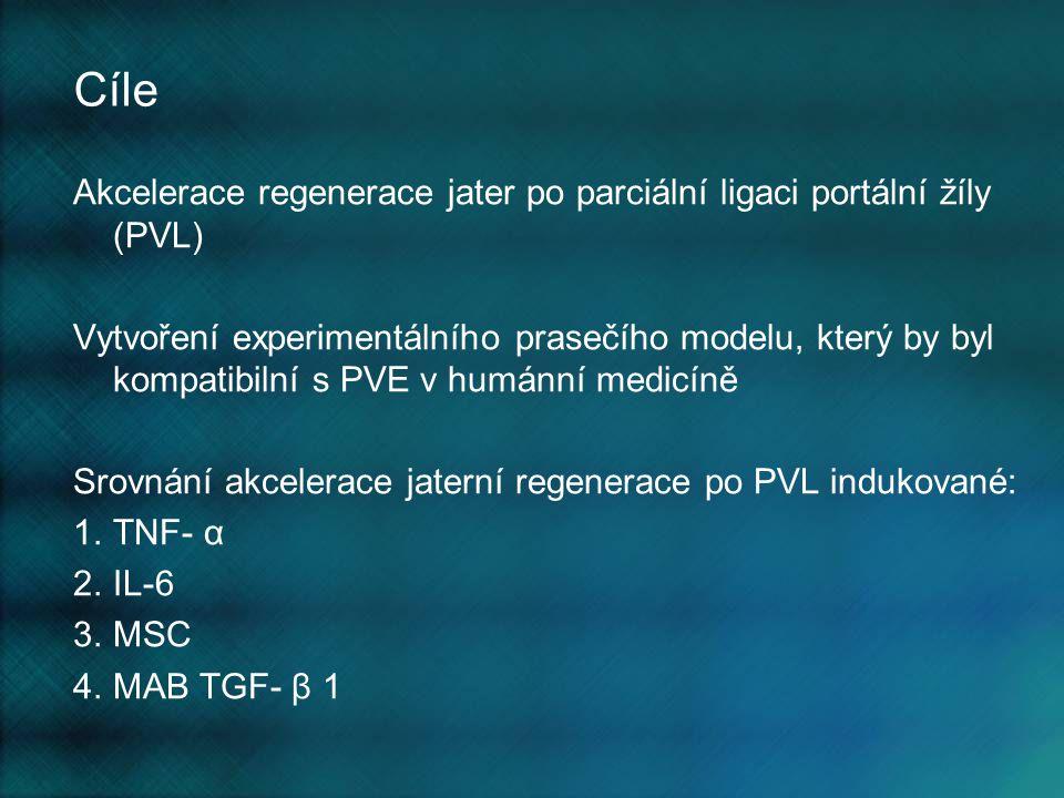 Methody I Experimentální skupiny: TGFβ – 7prasat TNFα – 8 prasat IL 6 - 8 prasat MSC – 6 prasat Kontrolní skupina – 9 prasat Ligace větví portální žíly pro pravý mediální, pravý laterální a kaudální lalok podání rpIL-6 nebo rpTNFα nebo MSC beprostředně po operaci 24 hodin po PVL podání monoklonální protilátky proti TGF β 1