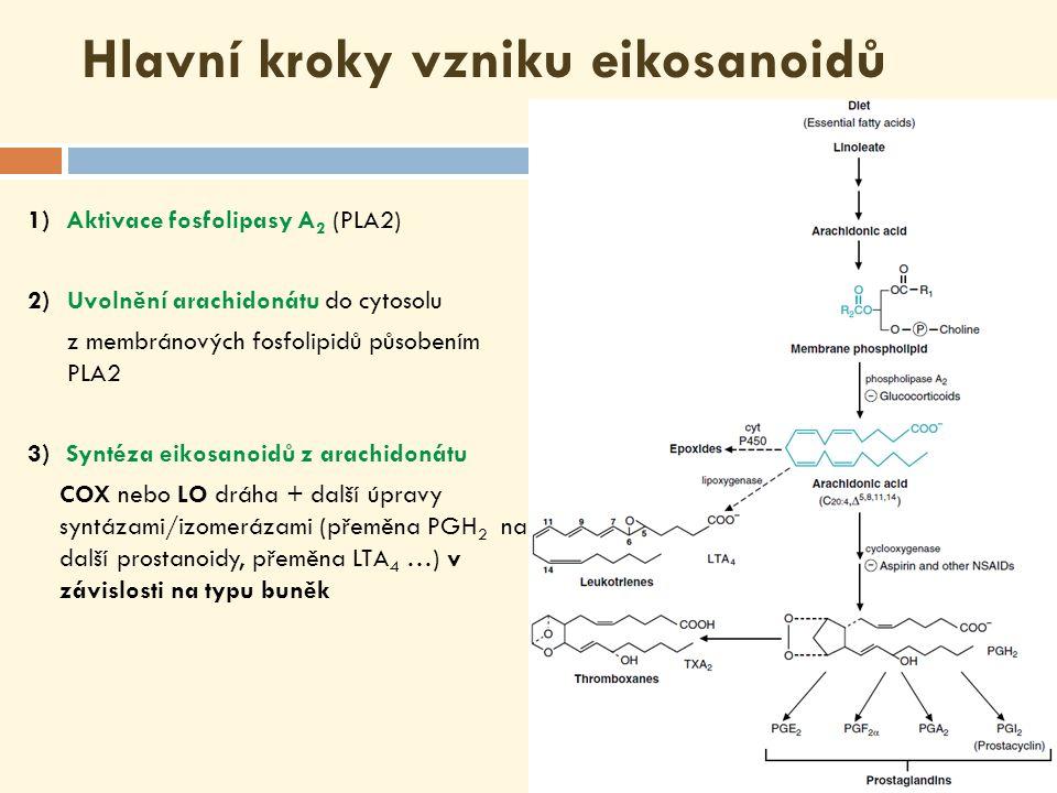Hlavní kroky vzniku eikosanoidů 1) Aktivace fosfolipasy A 2 (PLA2) 2)Uvolnění arachidonátu do cytosolu z membránových fosfolipidů působením PLA2 3) Syntéza eikosanoidů z arachidonátu COX nebo LO dráha + další úpravy syntázami/izomerázami (přeměna PGH 2 na další prostanoidy, přeměna LTA 4 …) v závislosti na typu buněk