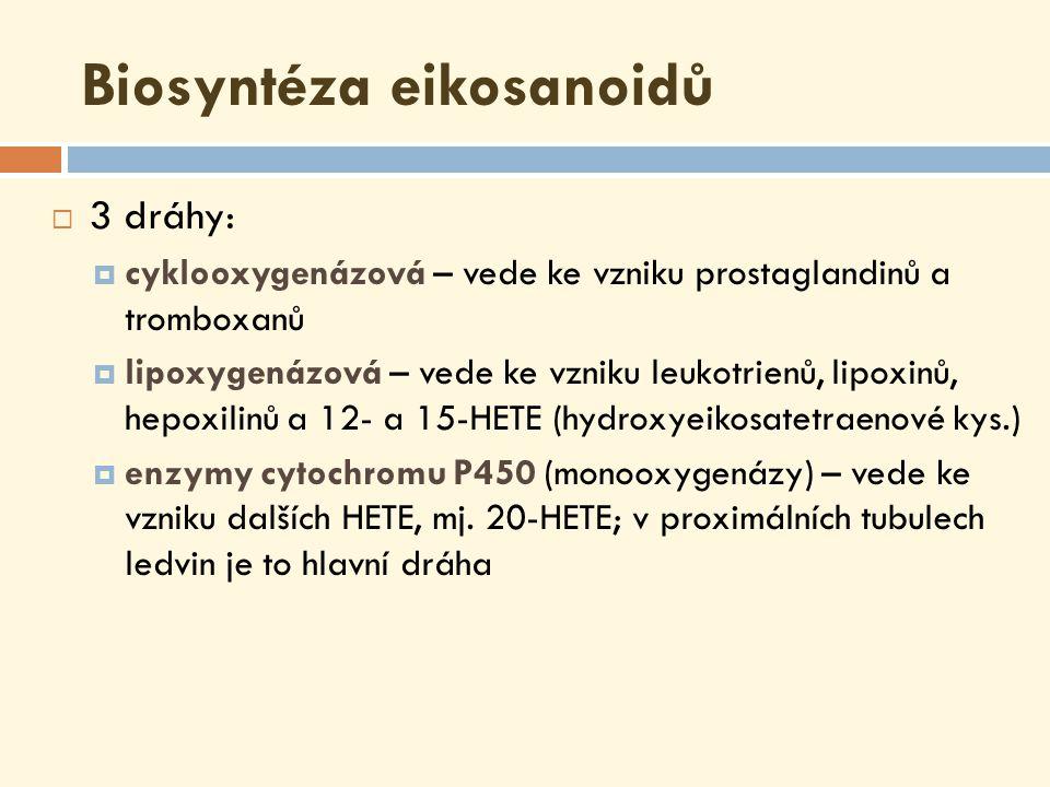 Cyklooxygenázová dráha (COX)  Prostaglandin H-syntháza, která existuje ve 2 izoformách (PGHS-1/COX-1, PGHS-2/COX-2) a má dvě různé aktivity:  cyklooxygenázovou (COX) – katalyzuje adici dvou molekul O 2 do molekuly arachidonátu za vzniku PGG 2  hydroperoxidázovou – katalyzuje přeměnu hydroperoxyskupiny PGG 2 na hydroxyskupinu PGH 2 ; využívá glutathion  Je schopna autoinaktivace !!.