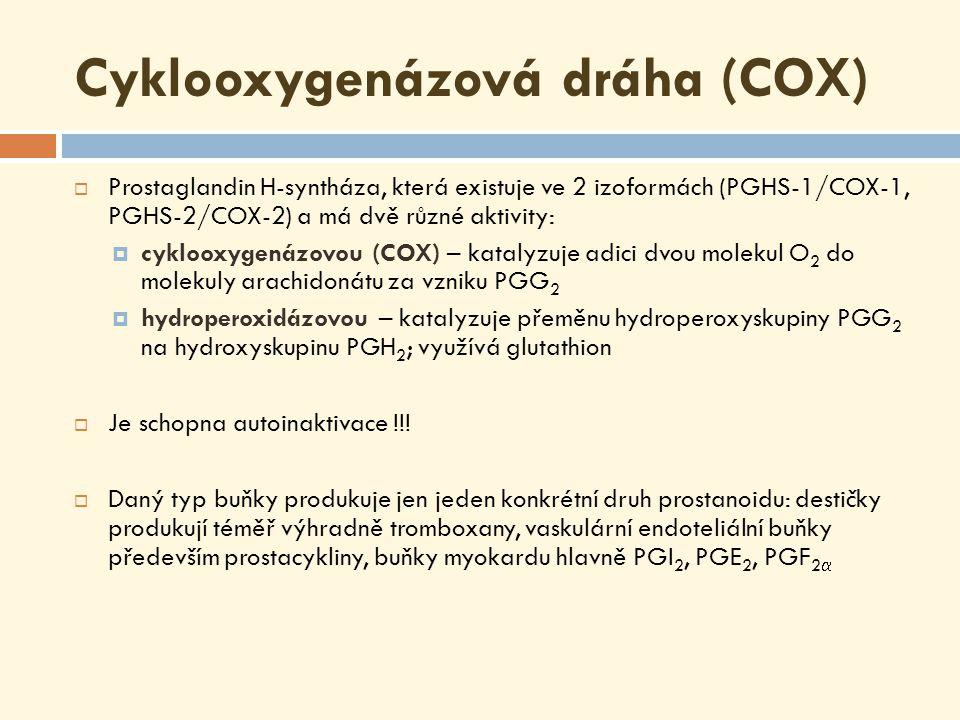 Prostaglandin H-syntáza vzniká cyklický endoperoxid (9,11) & 15-hydroperoxid PGH 2 – prekursor tromboxanů a dalších prostaglandinů skupiny 2 !!!