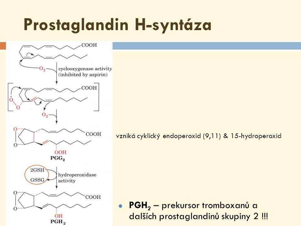 Produkty COX dráhy  Destičky obsahují tromboxansyntázu, která řídí syntézu tromboxanů  Endoteliální buňky cév obsahují prostacyklinsyntázu, která katalyzuje vznik prostacyklinů (PGI 2 ) šestičlenný kruh obsahující jeden atom kyslíku (tromboxan) ( prostacyklin ) cyklopentanový kruh