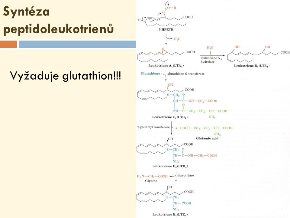 Syntéza peptidoleukotrienů Vyžaduje glutathion!!!