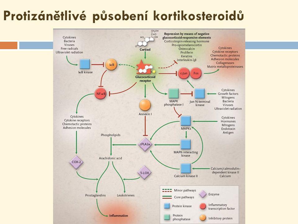 Biologické účinky eikosanoidů  Eikosanoidy účinkují už ve velmi nízkých koncentracích (jako hormony)  Mají krátký poločas, působí tedy na autokrinní a parakrinní úrovni (na rozdíl od hormonů)  Účinky v organismu se liší nejen podle druhu eikosanoidu, ale i podle toho, na které receptory může v daném místě působit