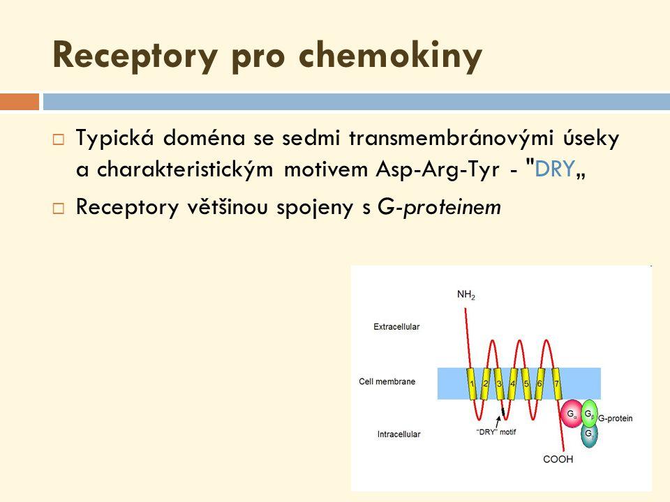"""Receptory pro chemokiny  Typická doména se sedmi transmembránovými úseky a charakteristickým motivem Asp-Arg-Tyr - DRY""""  Receptory většinou spojeny s G-proteinem"""
