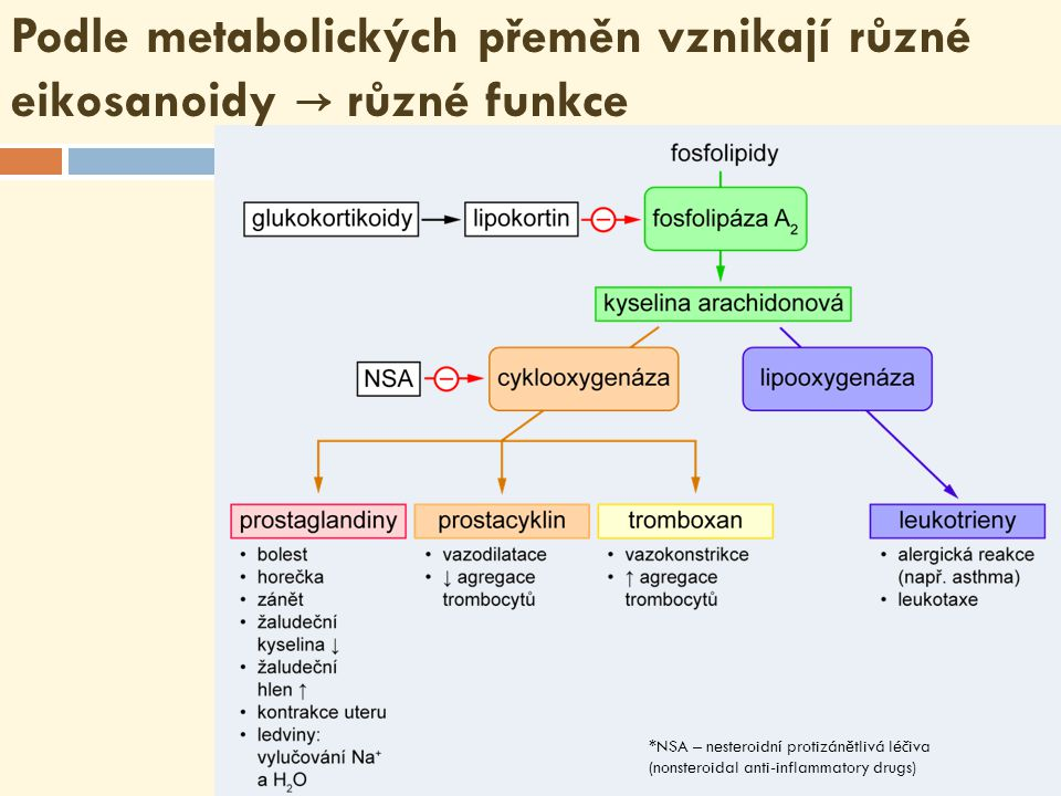 Podle metabolických přeměn vznikají různé eikosanoidy → různé funkce *NSA – nesteroidní protizánětlivá léčiva (nonsteroidal anti-inflammatory drugs)