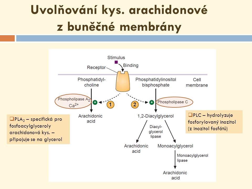 ∆ 6 – DESATURÁZA Mikrozomální systém prodlužující řetězec (ELONGÁZA) ∆ 5 – DESATURÁZA Konverze linoleátu na arachidonát  kys.