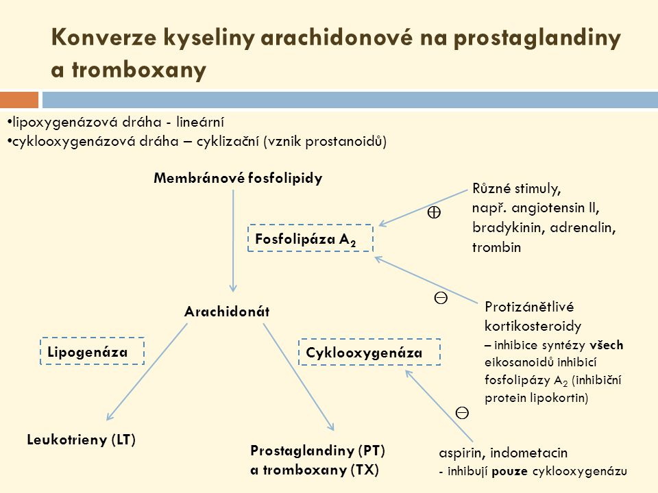Konverze kyseliny arachidonové na prostaglandiny a tromboxany Membránové fosfolipidy Arachidonát Prostaglandiny (PT) a tromboxany (TX) Leukotrieny (LT) Fosfolipáza A 2 Různé stimuly, např.