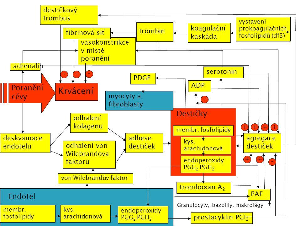  Počet trombocytů  Čas krvácivosti (Duke)  Protrombinový čas (Quickův test)  aPTT  Trombinový čas