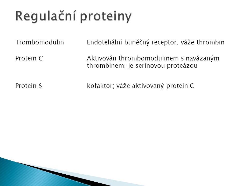 TrombomodulinEndoteliální buněčný receptor, váže thrombin Protein CAktivován thrombomodulinem s navázaným thrombinem; je serinovou proteázou Protein S