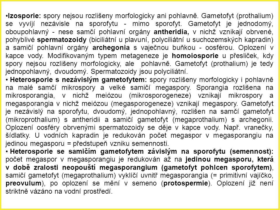 Izosporie: spory nejsou rozlišeny morfologicky ani pohlavně. Gametofyt (prothalium) se vyvíjí nezávisle na sporofytu - mimo sporofyt. Gametofyt je jed