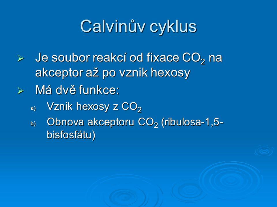 Calvinův cyklus  Je soubor reakcí od fixace CO 2 na akceptor až po vznik hexosy  Má dvě funkce: a) Vznik hexosy z CO 2 b) Obnova akceptoru CO 2 (rib