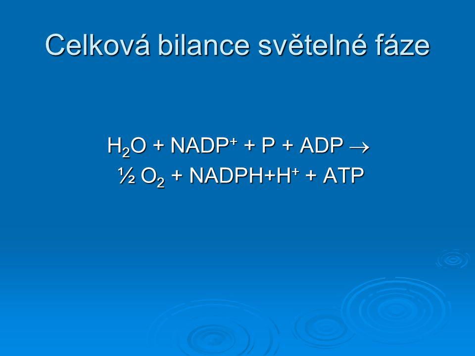 Celková bilance světelné fáze H 2 O + NADP + + P + ADP  ½ O 2 + NADPH+H + + ATP ½ O 2 + NADPH+H + + ATP