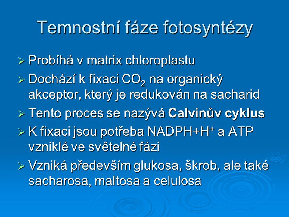 Temnostní fáze fotosyntézy  Probíhá v matrix chloroplastu  Dochází k fixaci CO 2 na organický akceptor, který je redukován na sacharid  Tento proce
