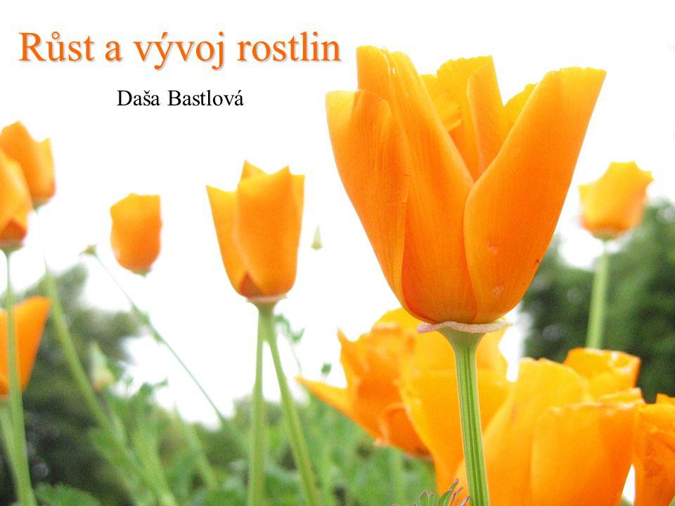 Růst a vývoj rostlin Daša Bastlová