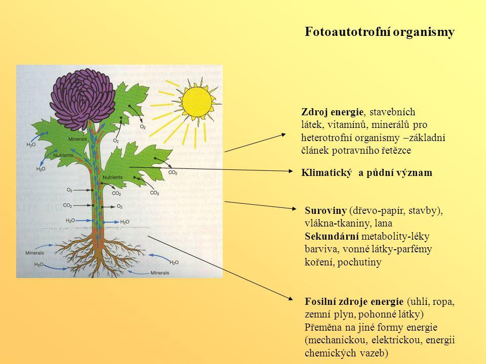 Fotoautotrofní organismy Zdroj energie, stavebních látek, vitamínů, minerálů pro heterotrofní organismy –základní článek potravního řetězce Fosilní zd