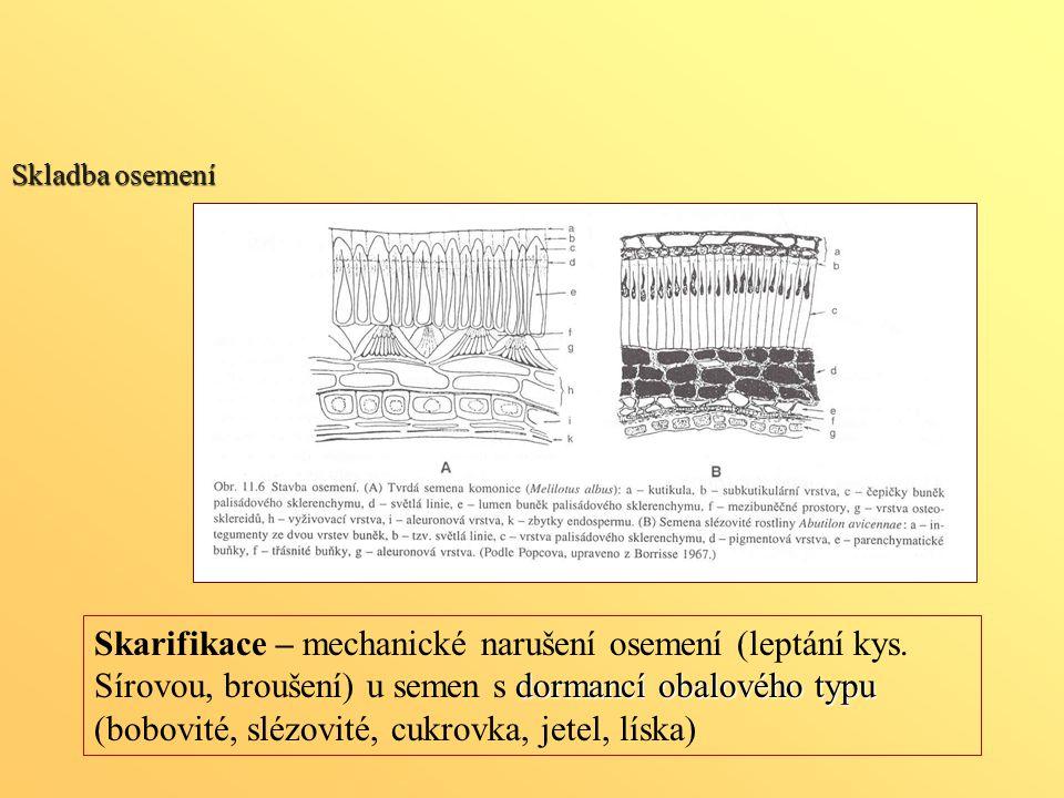 Skladba osemení dormancí obalového typu Skarifikace – mechanické narušení osemení (leptání kys. Sírovou, broušení) u semen s dormancí obalového typu (