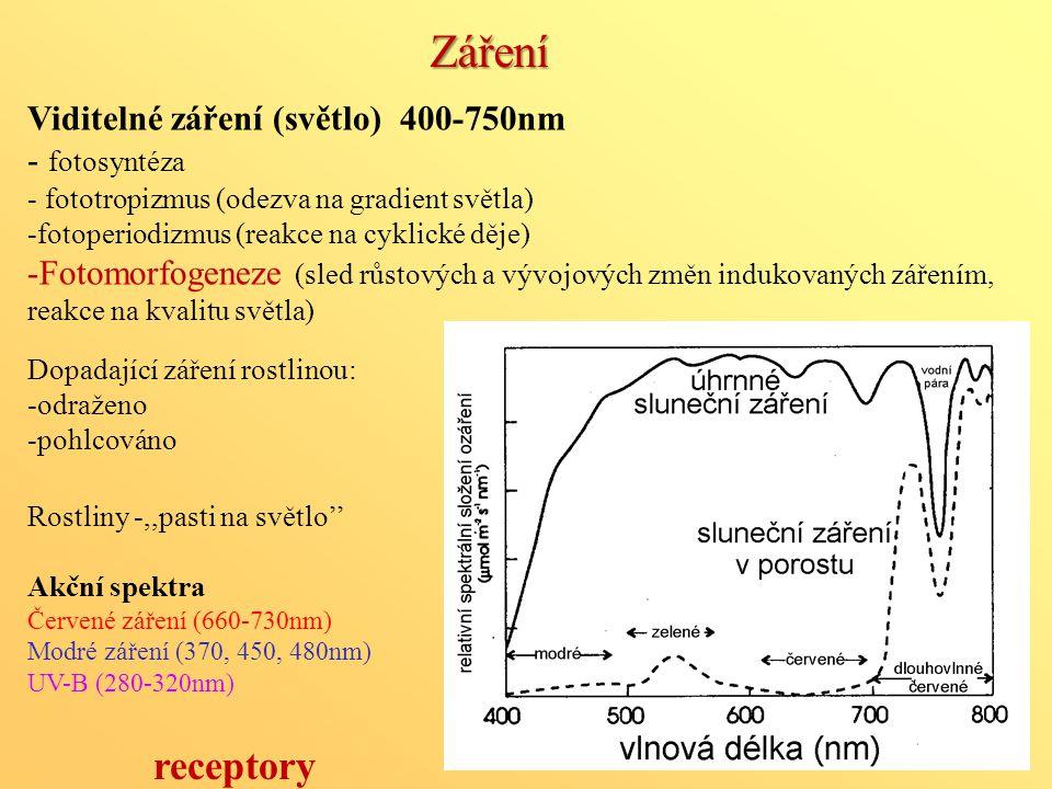 Záření Viditelné záření (světlo) 400-750nm - fotosyntéza - fototropizmus (odezva na gradient světla) -fotoperiodizmus (reakce na cyklické děje) -Fotom