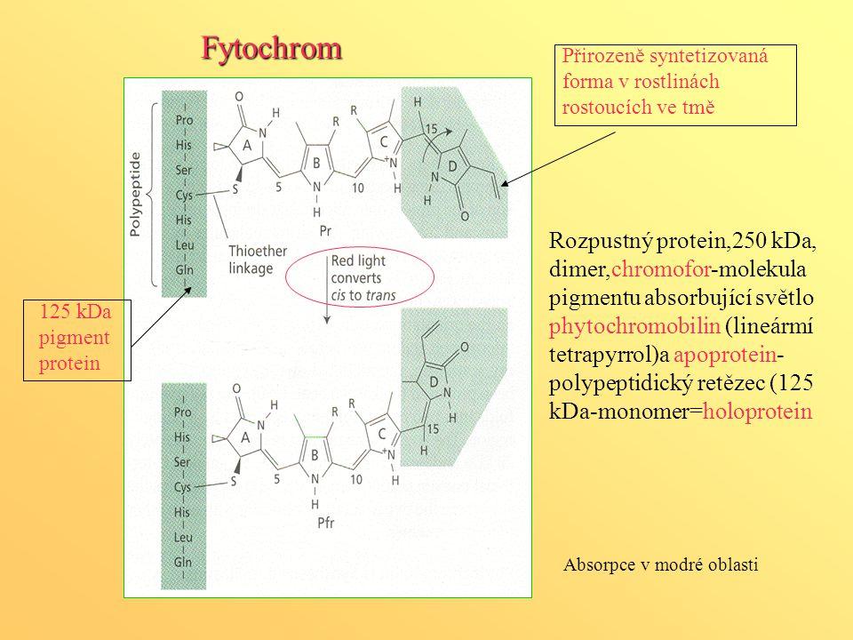 125 kDa pigment protein Přirozeně syntetizovaná forma v rostlinách rostoucích ve tmě Absorpce v modré oblasti Fytochrom Rozpustný protein,250 kDa, dim