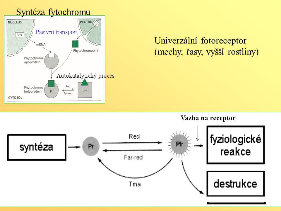 Temnotní reverze Pasivní transport Autokatalytický proces Univerzální fotoreceptor (mechy, řasy, vyšší rostliny) Vazba na receptor Syntéza fytochromu