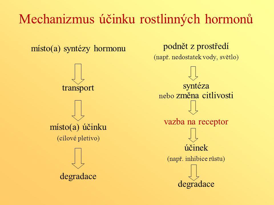 Mechanizmus účinku rostlinných hormonů místo(a) syntézy hormonu transport místo(a) účinku (cílové pletivo) degradace podnět z prostředí (např. nedosta