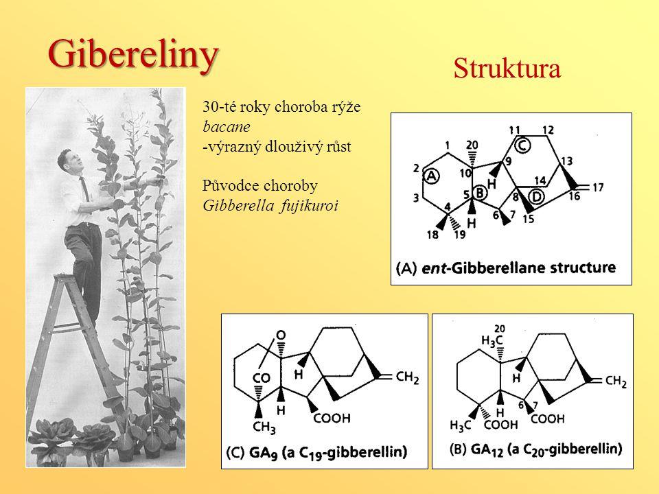 Struktura Gibereliny 30-té roky choroba rýže bacane -výrazný dlouživý růst Původce choroby Gibberella fujikuroi