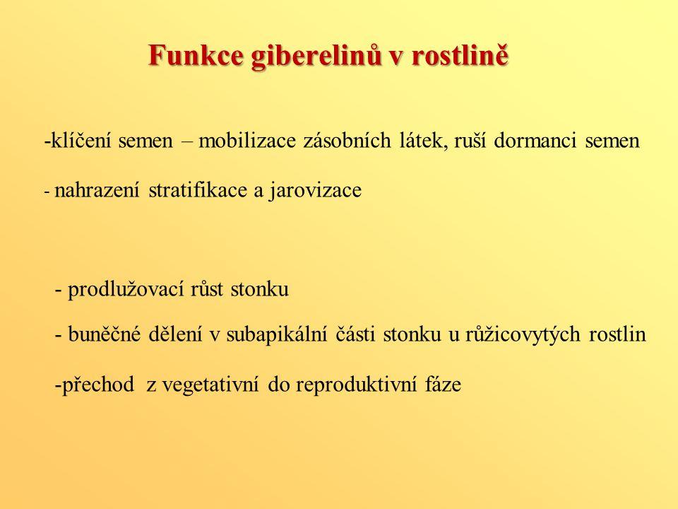 Funkce giberelinů v rostlině - prodlužovací růst stonku - buněčné dělení v subapikální části stonku u růžicovytých rostlin -přechod z vegetativní do r