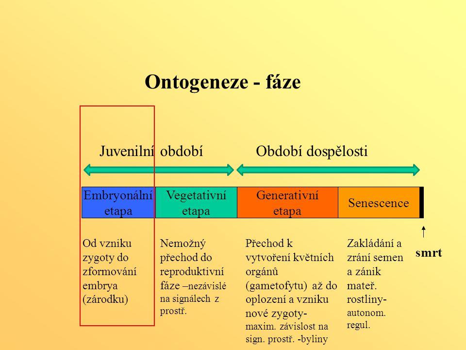 Generativní etapa Senescence Embryonální etapa Vegetativní etapa smrt Ontogeneze - fáze Od vzniku zygoty do zformování embrya (zárodku) Nemožný přecho