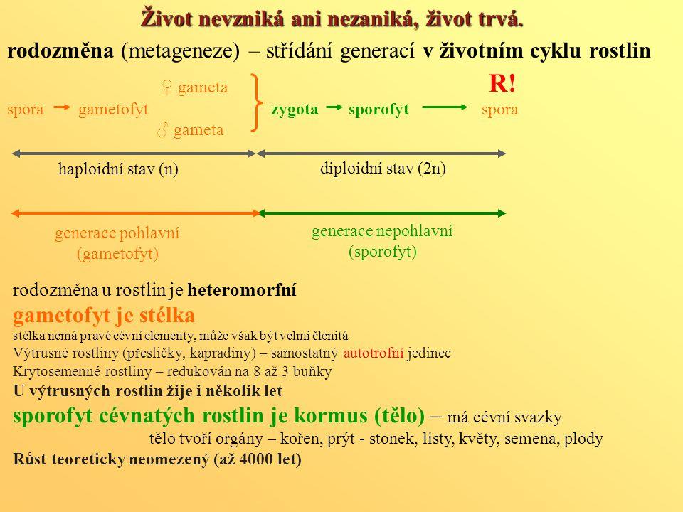 rodozměna (metageneze) – střídání generací v životním cyklu rostlin ♀ gameta spora gametofyt zygota sporofyt spora ♂ gameta generace pohlavní (gametof