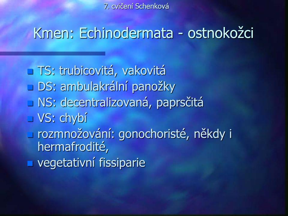 Kmen: Echinodermata - ostnokožci n TS: trubicovitá, vakovitá n DS: ambulakrální panožky n NS: decentralizovaná, paprsčitá n VS: chybí n rozmnožování: