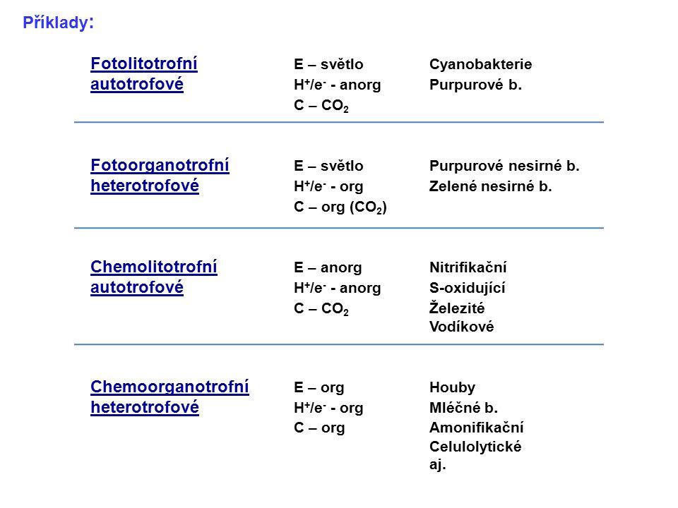 Příklady : Fotolitotrofní E – světloCyanobakterie autotrofové H + /e - - anorgPurpurové b. C – CO 2 Fotoorganotrofní E – světloPurpurové nesirné b. he