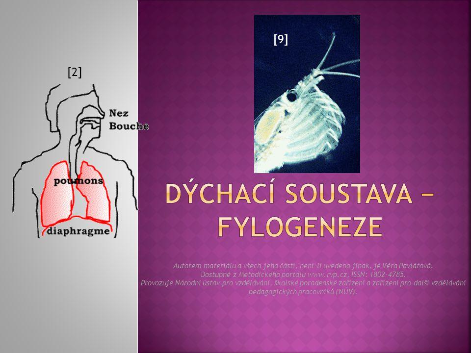  Co je to dýchání. Jaká je souvislost mezi dýchací a oběhovou soustavou.