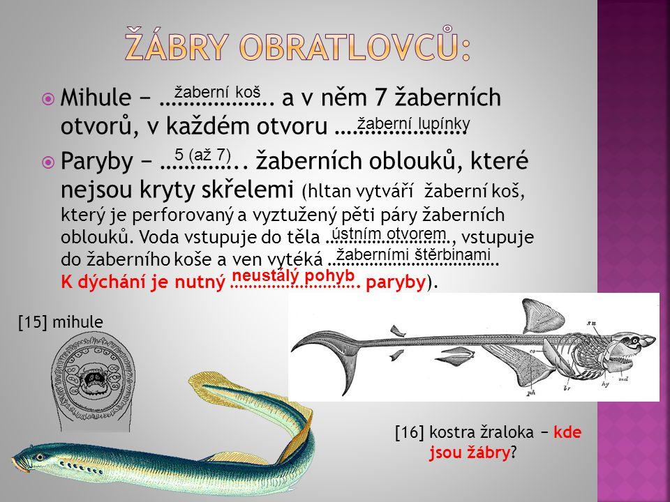  Mihule − ………………. a v něm 7 žaberních otvorů, v každém otvoru ………………….  Paryby − ………….. žaberních oblouků, které nejsou kryty skřelemi (hltan vytvář