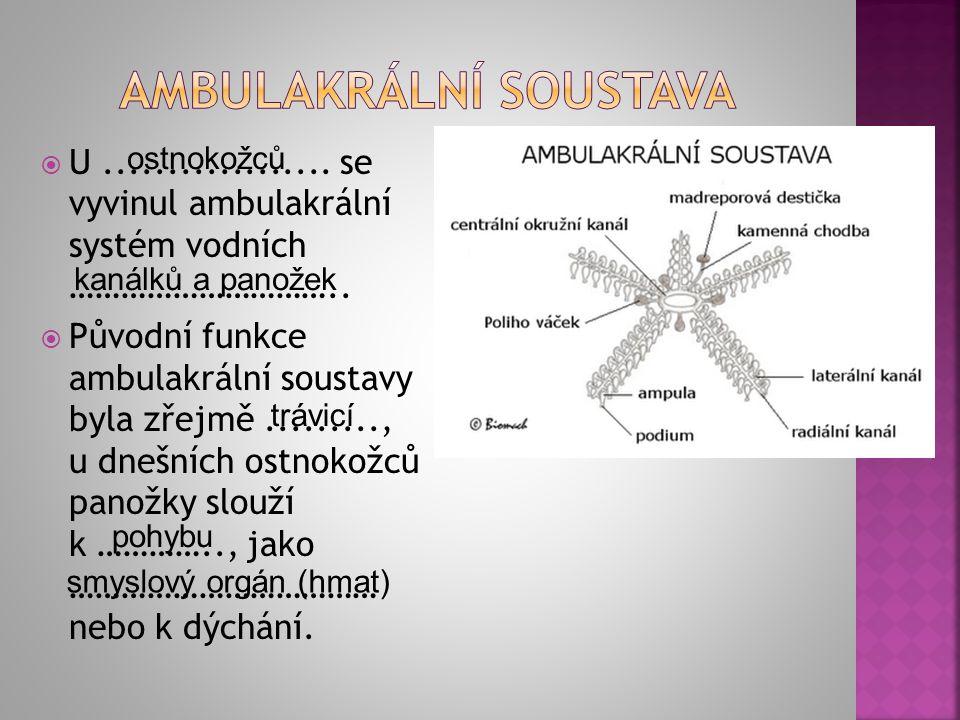  U.................. se vyvinul ambulakrální systém vodních …………………………..  Původní funkce ambulakrální soustavy byla zřejmě........., u dnešních ostn