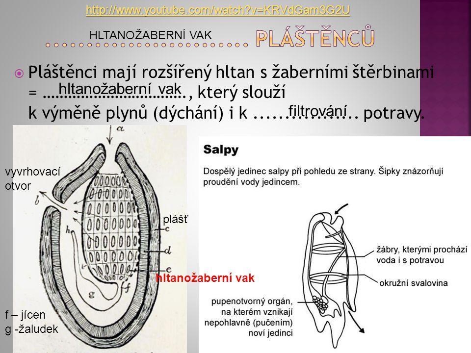  Pláštěnci mají rozšířený hltan s žaberními štěrbinami = ……………………………., který slouží k výměně plynů (dýchání) i k................. potravy. vyvrhovací