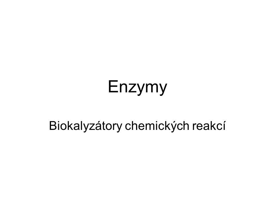 Enzymy Biokalyzátory chemických reakcí