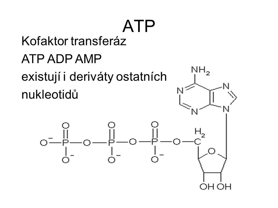 ATP Kofaktor transferáz ATP ADP AMP existují i deriváty ostatních nukleotidů