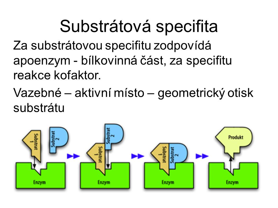 Substrátová specifita Za substrátovou specifitu zodpovídá apoenzym - bílkovinná část, za specifitu reakce kofaktor. Vazebné – aktivní místo – geometri