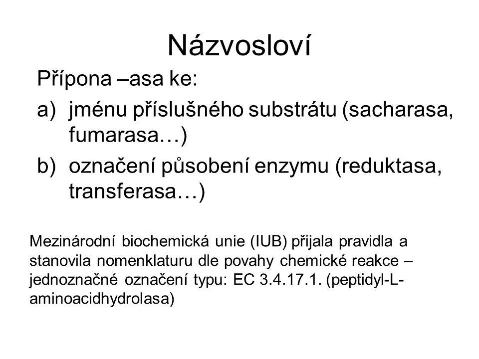 Názvosloví Přípona –asa ke: a)jménu příslušného substrátu (sacharasa, fumarasa…) b)označení působení enzymu (reduktasa, transferasa…) Mezinárodní bioc