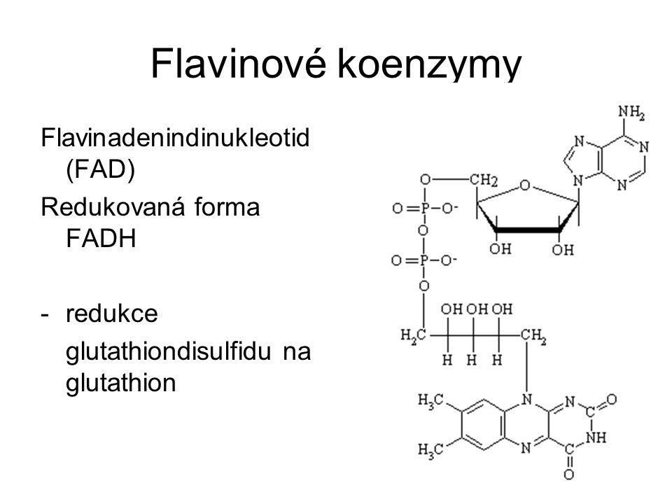 Flavinové koenzymy Flavinadenindinukleotid (FAD) Redukovaná forma FADH -redukce glutathiondisulfidu na glutathion