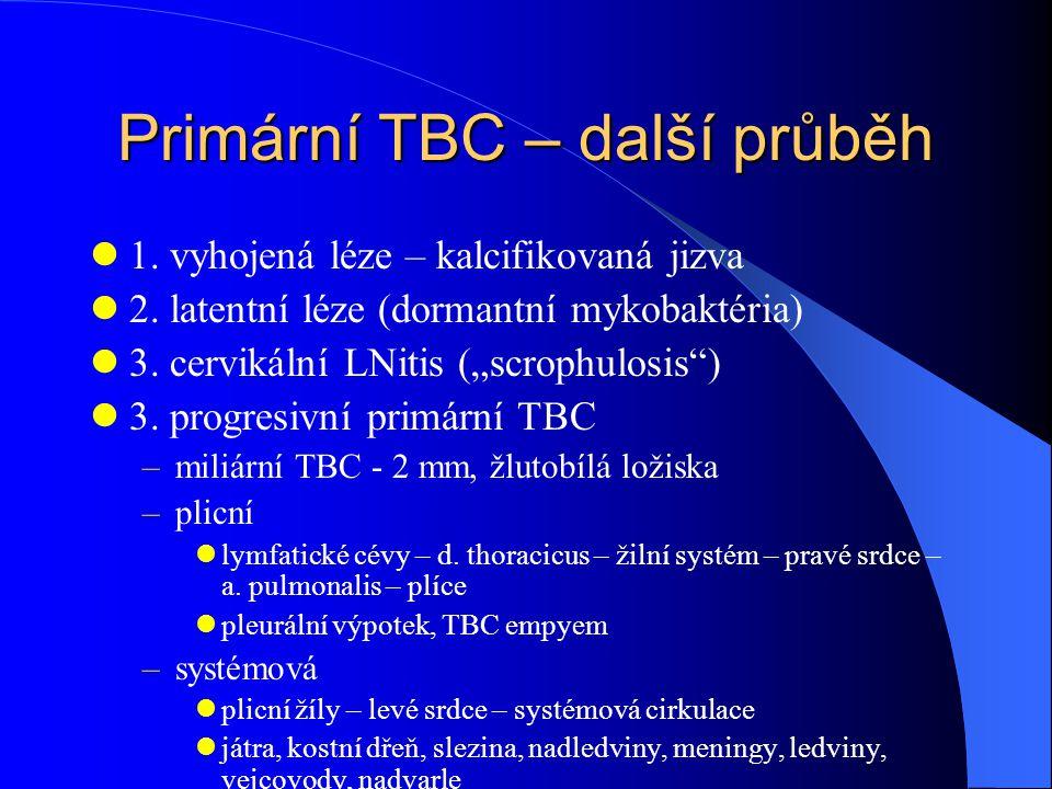 """Primární TBC – další průběh 1. vyhojená léze – kalcifikovaná jizva 2. latentní léze (dormantní mykobaktéria) 3. cervikální LNitis (""""scrophulosis"""") 3."""